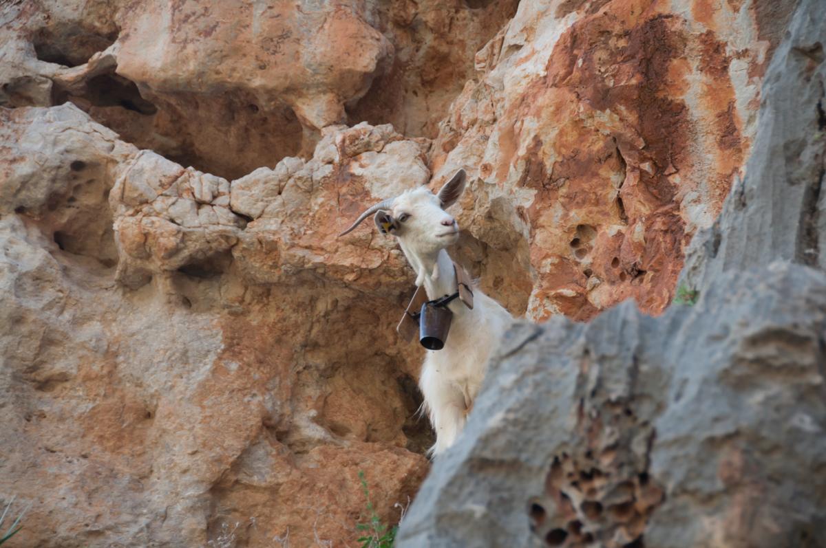 Скалолазание на Сицилии с Клубом скалолазания proClimb
