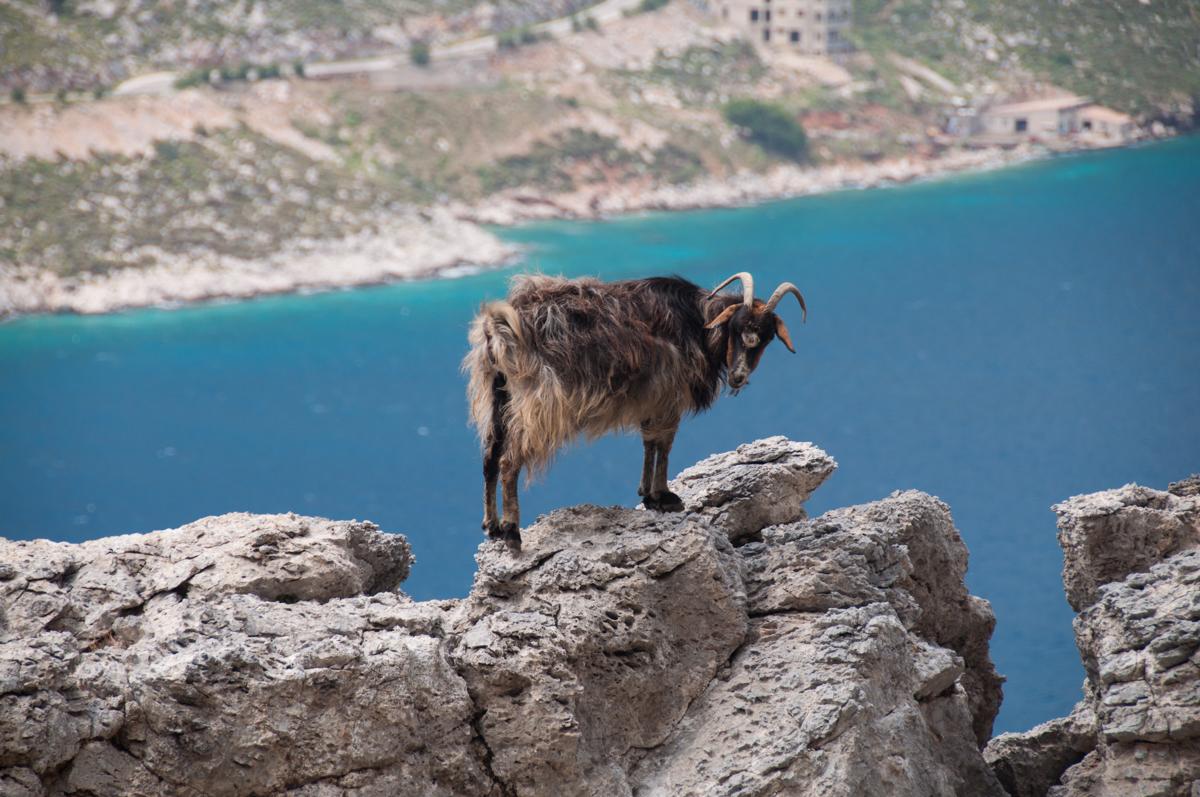 Скалолазание на Калимносе с Клубом скалолазания proClimb